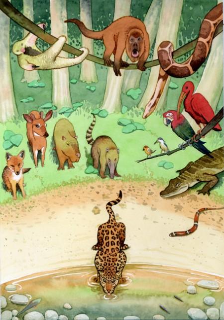 """Jaguar bebiendo, ilustración en acuarela de Tomás Hoya Cicero, para el cuento """"Historia de amor entre un río y un niño"""""""