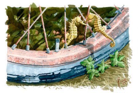 Hiporromance, acuarela de la serie Distorsión natura del artista Tomás Hoya Cicero. Ilustración. Illustration. Distorsión natura.